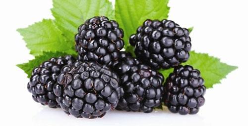 Khám phá loại quả giúp trẻ lâu, chống ung thư hiệu quả